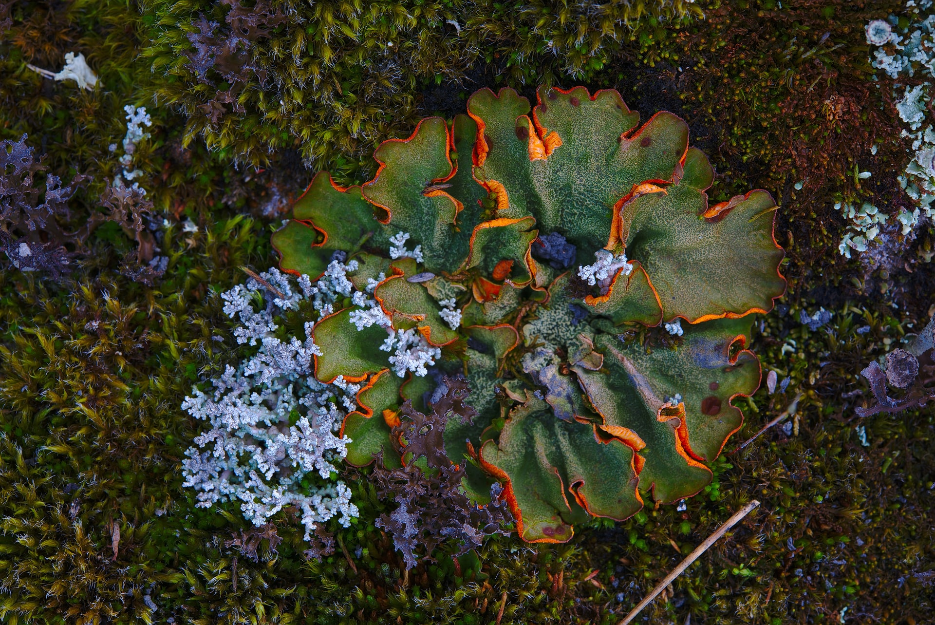 mold growth garden