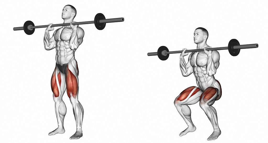 muscles targeted by squat